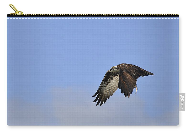 Osprey Carry-all Pouch featuring the photograph Osprey On The Move by Christine Stonebridge