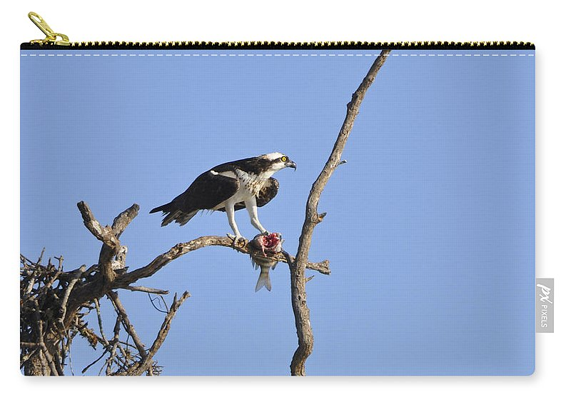 Osprey Carry-all Pouch featuring the photograph Osprey With Catch II by Christine Stonebridge