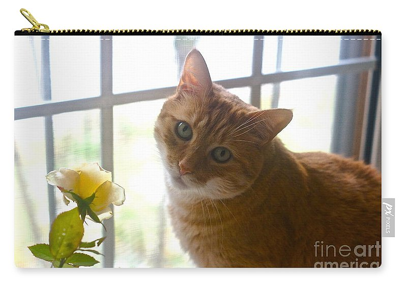 Orange Tabby Carry-all Pouch featuring the photograph Our New Princess by Byron Varvarigos