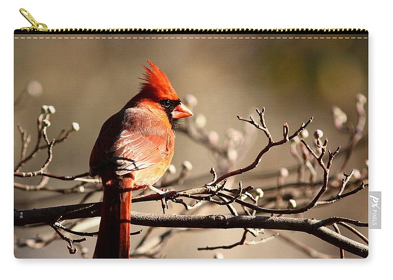 Cardinal Carry-all Pouch featuring the photograph Out On A Limb by Travis Truelove