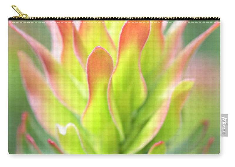 Mimetes Cucullatus Carry-all Pouch featuring the photograph Pagoda Protea by Neil Overy