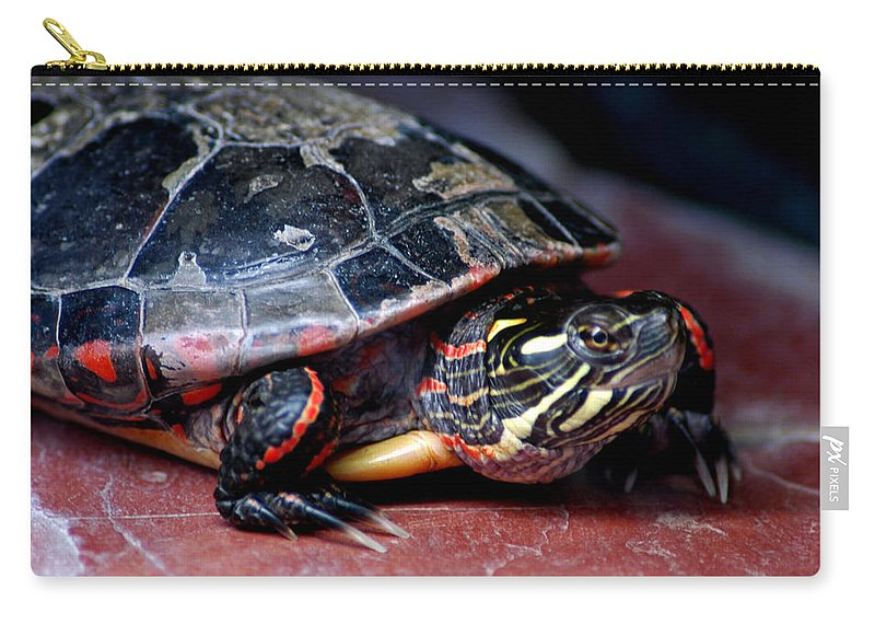 Usa Carry-all Pouch featuring the photograph Painted Turtle Michigan by LeeAnn McLaneGoetz McLaneGoetzStudioLLCcom