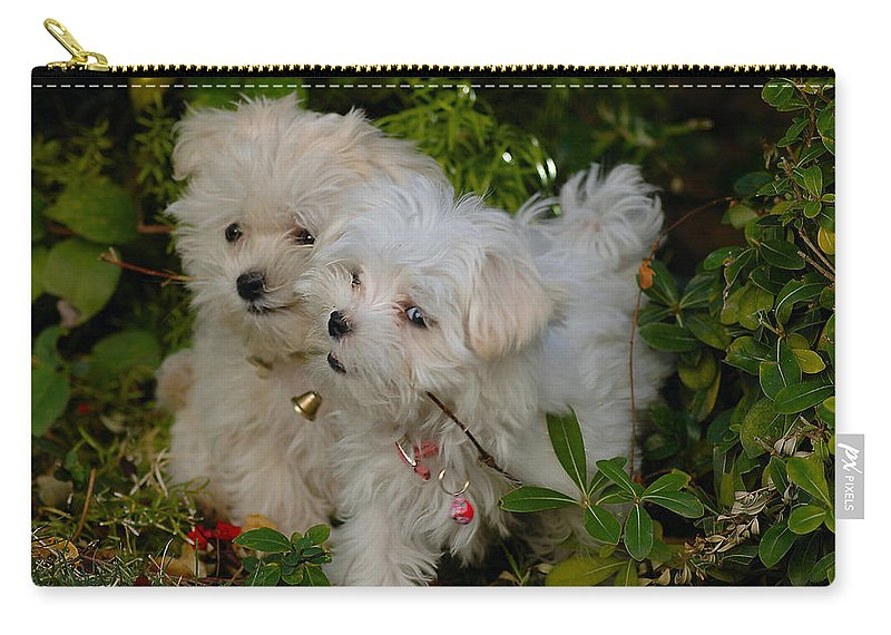 Dogs Carry-all Pouch featuring the photograph Pals by Lynn Bauer