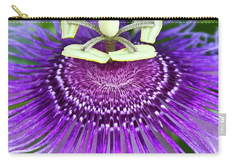 Cultivated Flowers - Plants Carry-all Pouch featuring the photograph Passion Flower by Albert Seger