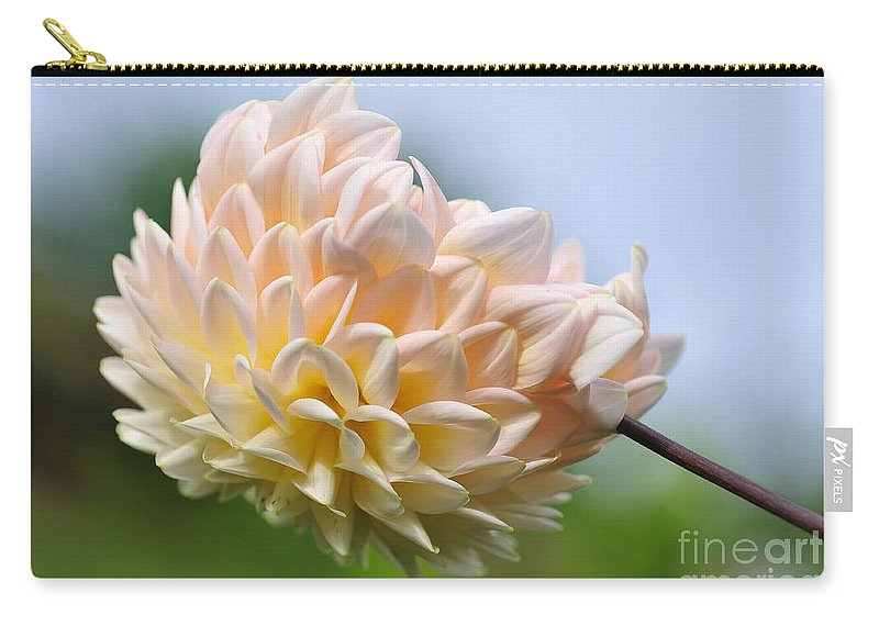 Photography Carry-all Pouch featuring the photograph Pastel Dahlia by Kaye Menner