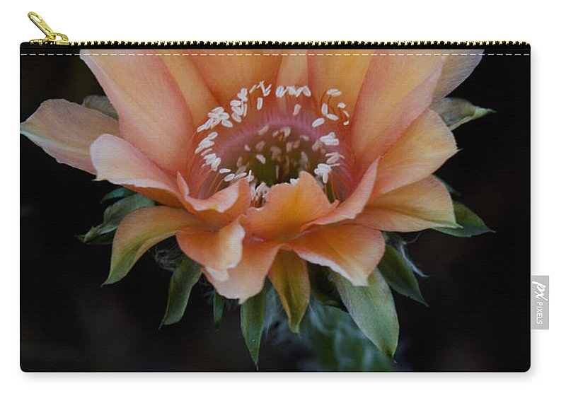 Echinopsis Carry-all Pouch featuring the photograph Peachy Keen by Saija Lehtonen