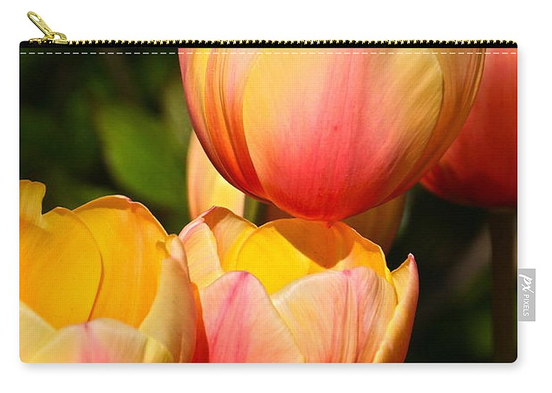 Tulip Array Carry-all Pouch featuring the photograph Peachy Tulips by Byron Varvarigos