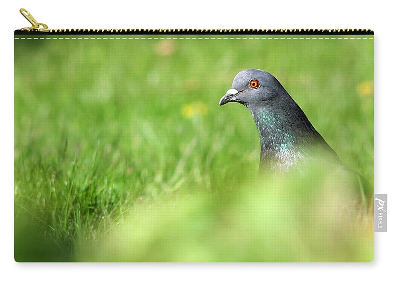 Pigeon Carry-all Pouch featuring the photograph Peek-a-boo Pigeon by Jeff Galbraith