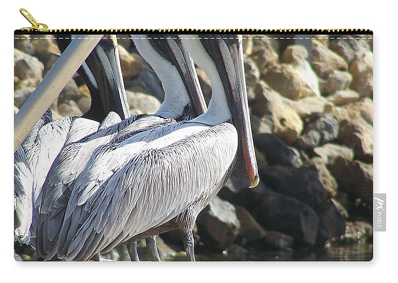 Keaton Beach Carry-all Pouch featuring the photograph Pelicans Of Keaton Beach Canal by Marilyn Holkham