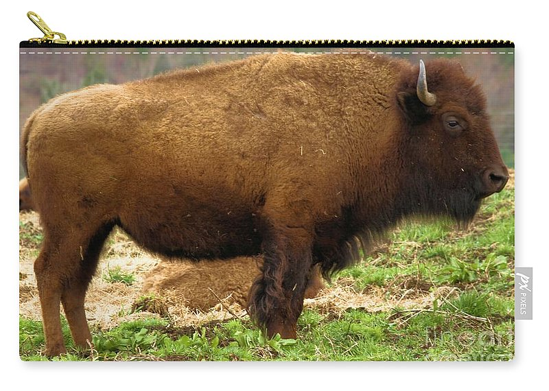 Bison Carry-all Pouch featuring the photograph Pennsylvania Bison by Adam Jewell