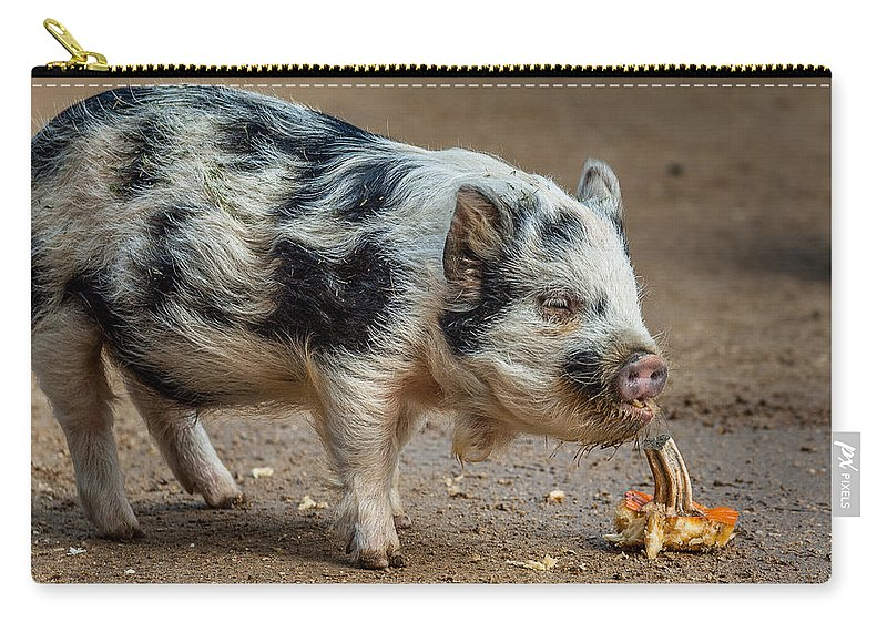 Pig Carry-all Pouch featuring the photograph Pig With An Attitude by Greg Nyquist
