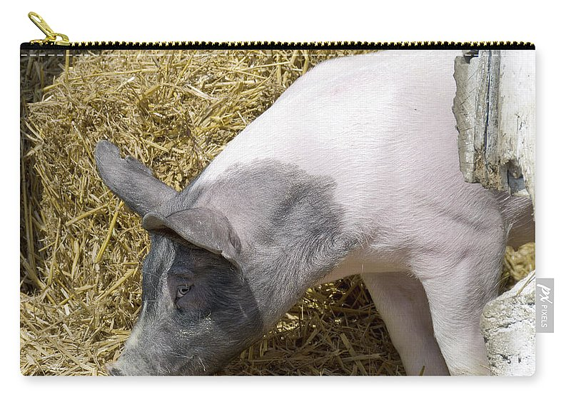 Usa Carry-all Pouch featuring the photograph Piggy Piggy In The Straw by LeeAnn McLaneGoetz McLaneGoetzStudioLLCcom