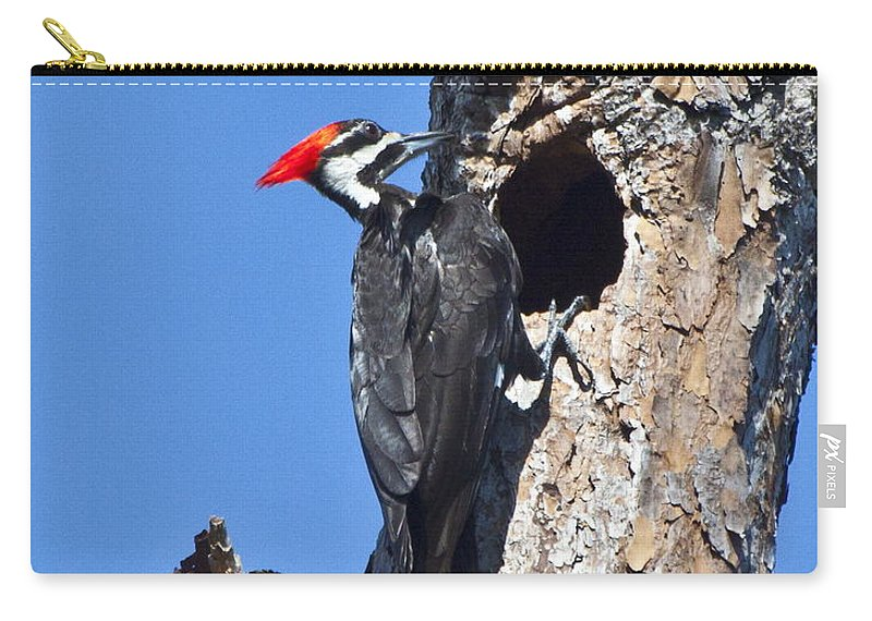 Pileated Woodpecker Carry-all Pouch featuring the photograph Pileated Woodpecker by Barbara Bowen