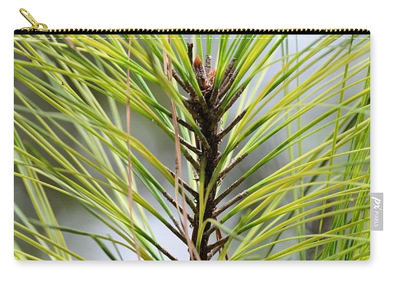 Pine Carry-all Pouch featuring the photograph Pine Leader by Maria Urso