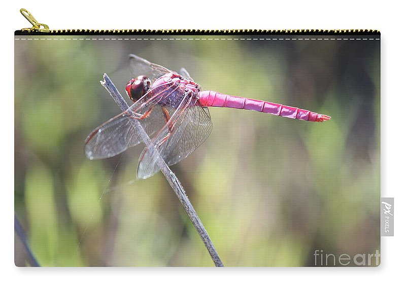 Dragonfly Carry-all Pouch featuring the photograph Pink Dragonfly In The Marsh by Carol Groenen