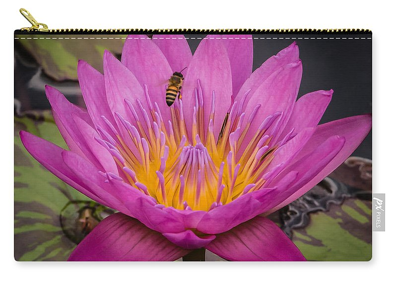 Close Up Carry-all Pouch featuring the photograph Pink Water Lily by Sean Wray