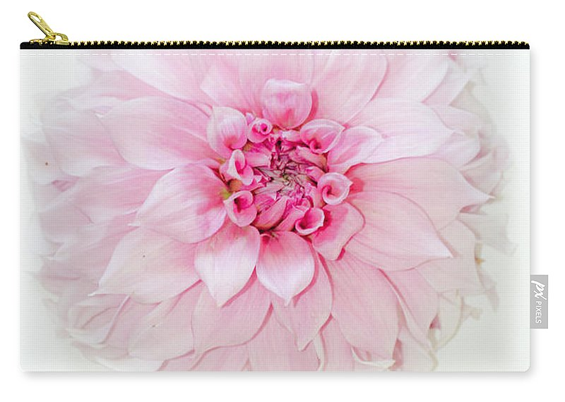 Dahlia Carry-all Pouch featuring the photograph Pink Precious In White by Marie Jamieson
