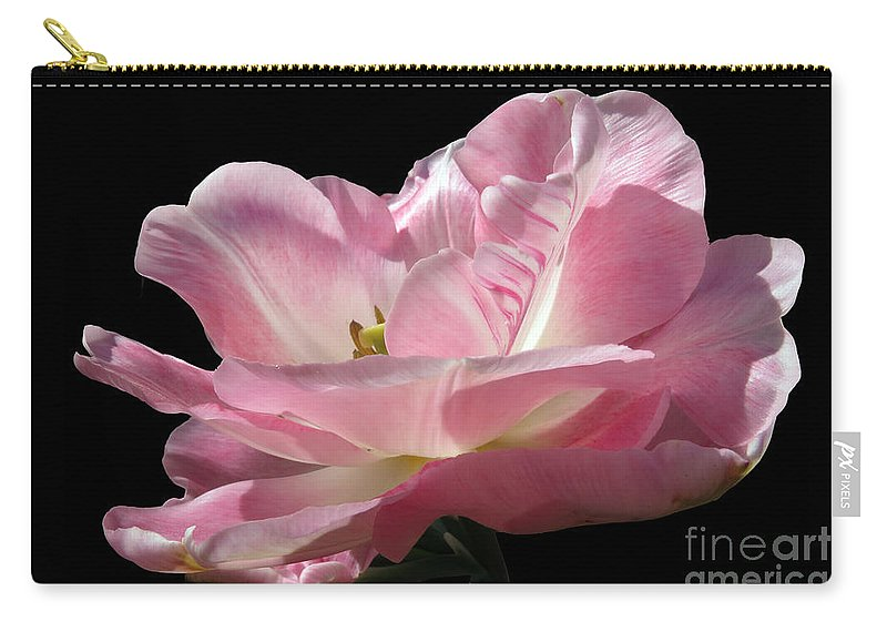 Tulip Carry-all Pouch featuring the photograph Pink Tulip Isolated by Darleen Stry