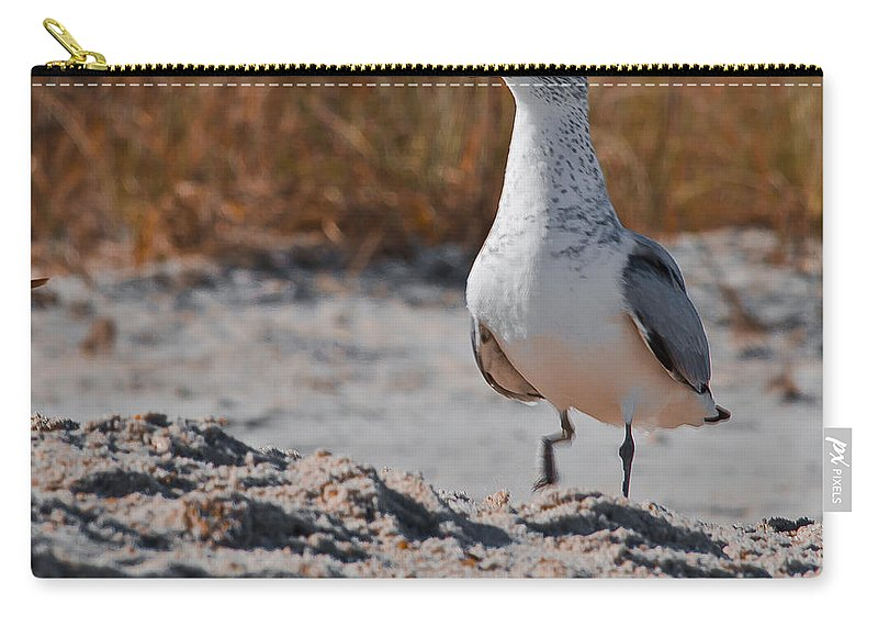 Poised Carry-all Pouch featuring the photograph Poised Seagull by Scott Hervieux