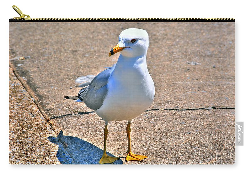 Carry-all Pouch featuring the photograph Posing Gull by Michael Frank Jr