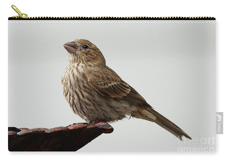 House Finch Carry-all Pouch featuring the photograph Praying by Lori Tordsen