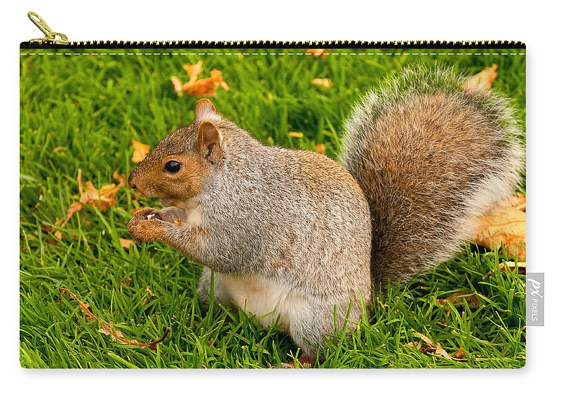 Squirrel Carry-all Pouch featuring the photograph Preparing For Winter by Paul Mangold