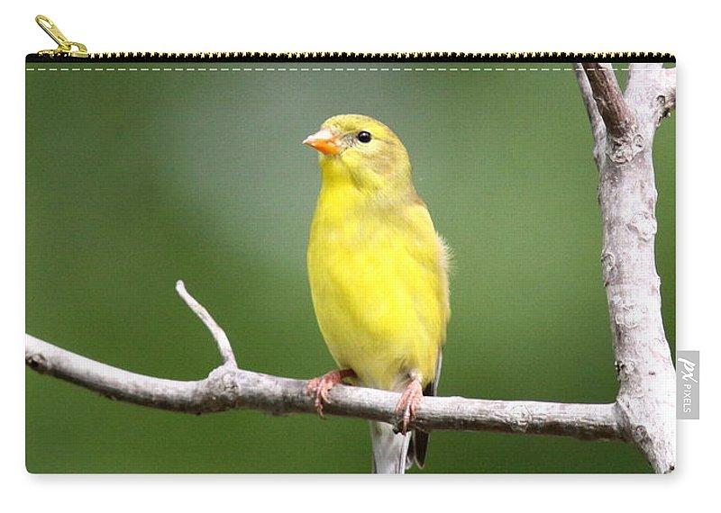 Goldfinch Carry-all Pouch featuring the photograph Pretty Little Lady by Travis Truelove