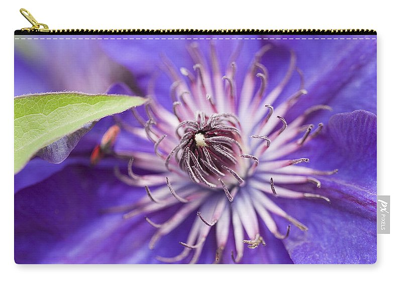 Clematis Carry-all Pouch featuring the photograph Pretty Purple Clematis by Kathy Clark