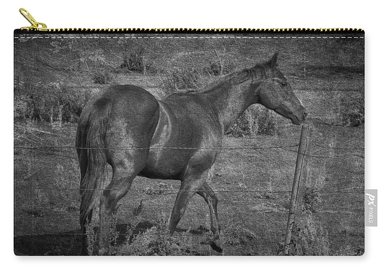 : Jerry Cordeiro Framed Prints Framed Prints Photographs Photographs Photographs Carry-all Pouch featuring the photograph Prince by The Artist Project