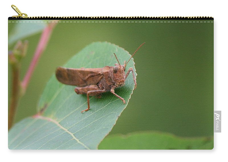 Carry-all Pouch featuring the photograph Private Eyes by Neal Eslinger