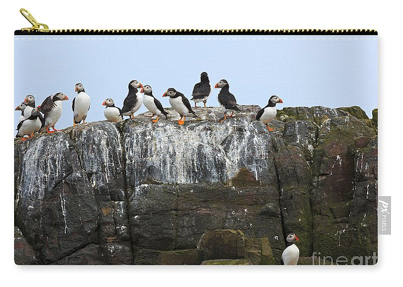 Puffins Carry-all Pouch featuring the photograph Puffins On A Cliff Edge by Louise Heusinkveld