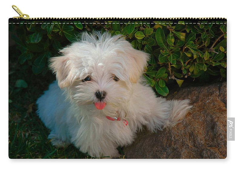 Dogs Carry-all Pouch featuring the photograph Pure Cuteness by Lynn Bauer