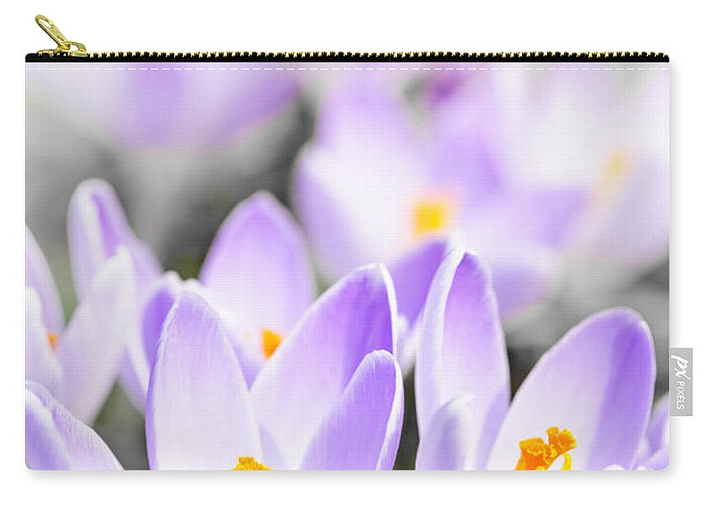 Crocus Carry-all Pouch featuring the photograph Purple Crocus Blossoms by Elena Elisseeva