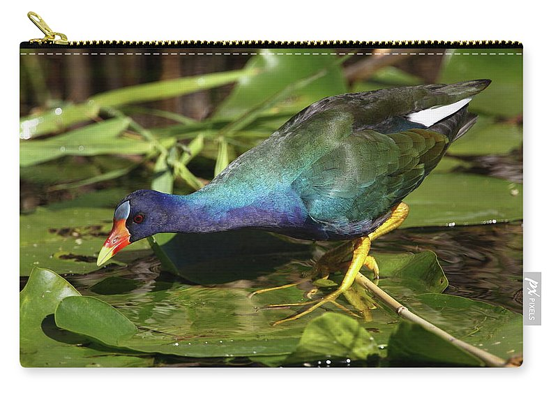 Carry-all Pouch featuring the photograph Purple Gallinule by Bruce J Robinson
