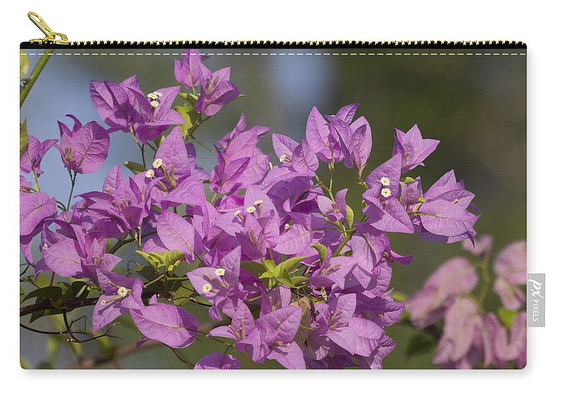 Purple Carry-all Pouch featuring the photograph Purple Of The Bougainvillea Blossoms by Douglas Barnard