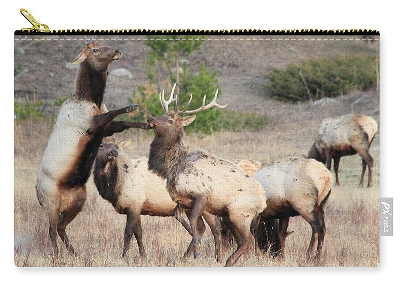 Elk Carry-all Pouch featuring the photograph Put Up Your Dukes by Shane Bechler
