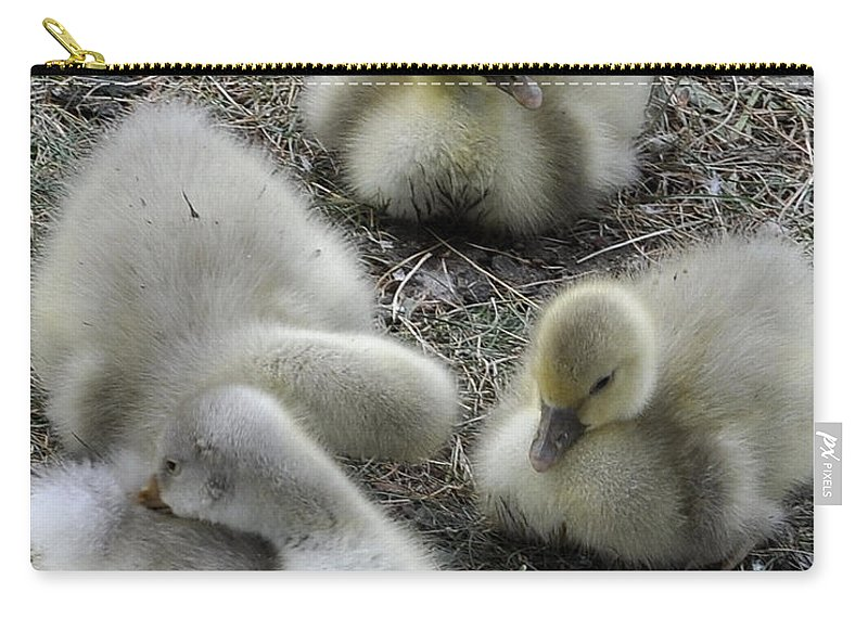 Geese Carry-all Pouch featuring the photograph Quadruplets Qp by Jim Brage