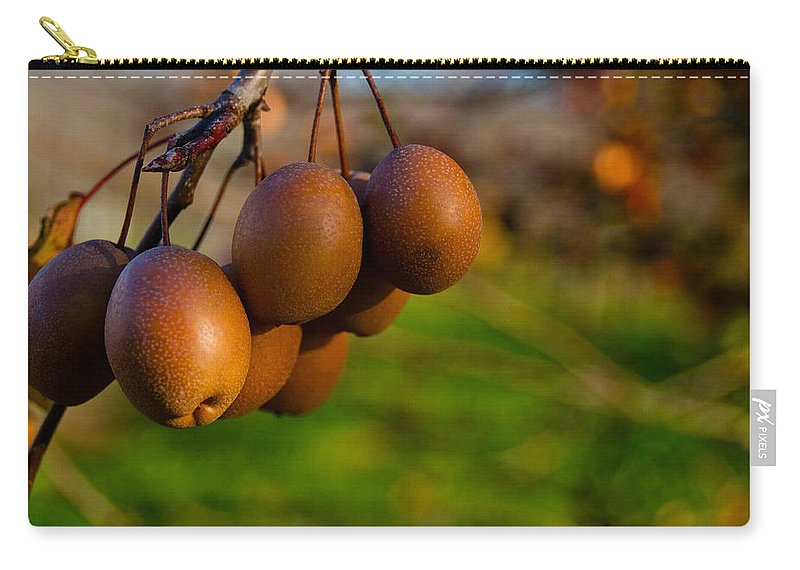 Quince Carry-all Pouch featuring the photograph Quince In The Early Moning Sun by Douglas Barnett