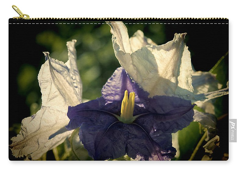 Flower Carry-all Pouch featuring the photograph Radiance by Steven Sparks
