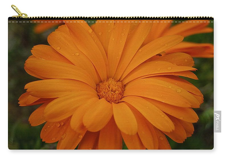 Flowers Carry-all Pouch featuring the photograph Rain Drops by Diana Hatcher