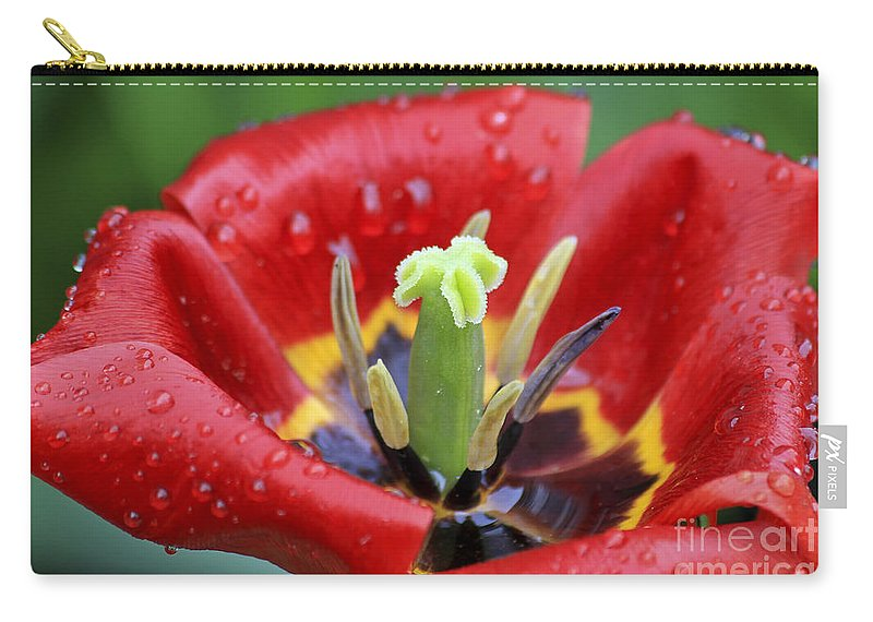 Flower Carry-all Pouch featuring the photograph Rain Kissed Tulip 2 by Teresa Zieba