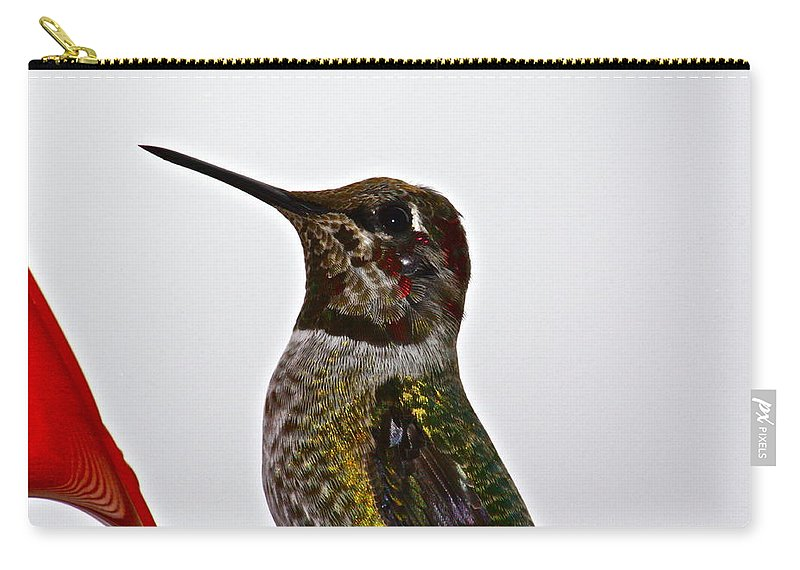 Birds Carry-all Pouch featuring the photograph Rainy Day Guest by Diana Hatcher