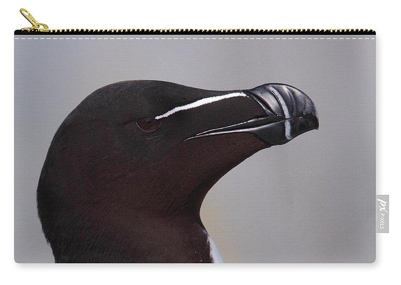 Razorbill Carry-all Pouch featuring the photograph Razorbill Portrait by Bruce J Robinson