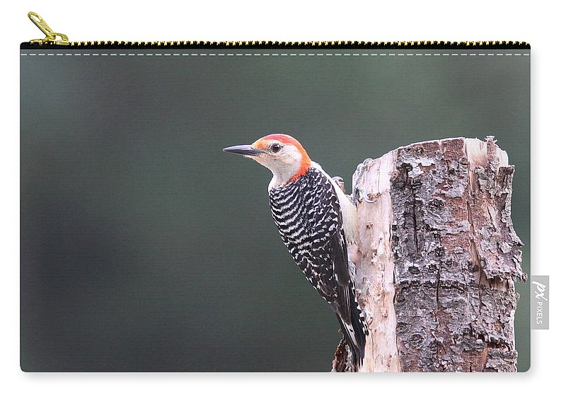 Red-bellied Woodpecker Carry-all Pouch featuring the photograph Red-bellied Woodpecker - Looking For Food by Travis Truelove