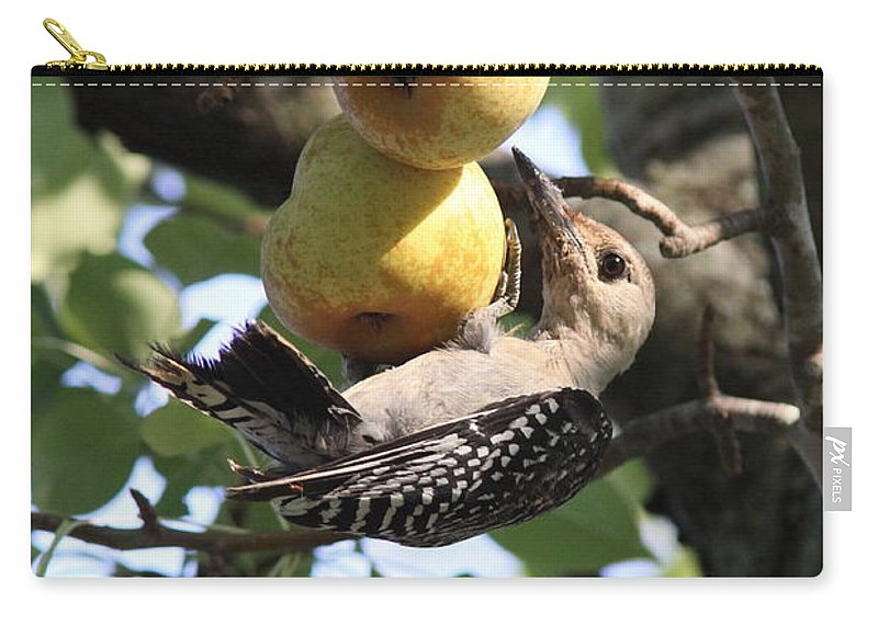 Red-bellied Woodpecker - Juvenile Carry-all Pouch featuring the photograph Red-bellied Woodpecker - Yummy Pears by Travis Truelove