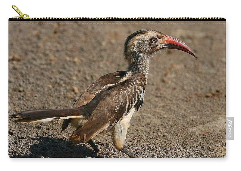 Hornbill Carry-all Pouch featuring the photograph Red-billed Hornbill by Bruce J Robinson