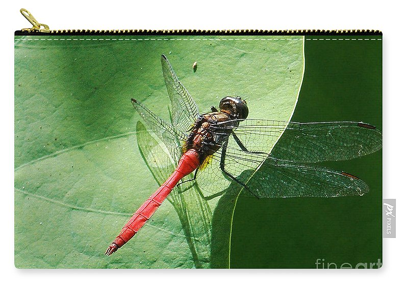 Photography Carry-all Pouch featuring the photograph Red Dragonfly     by Kaye Menner