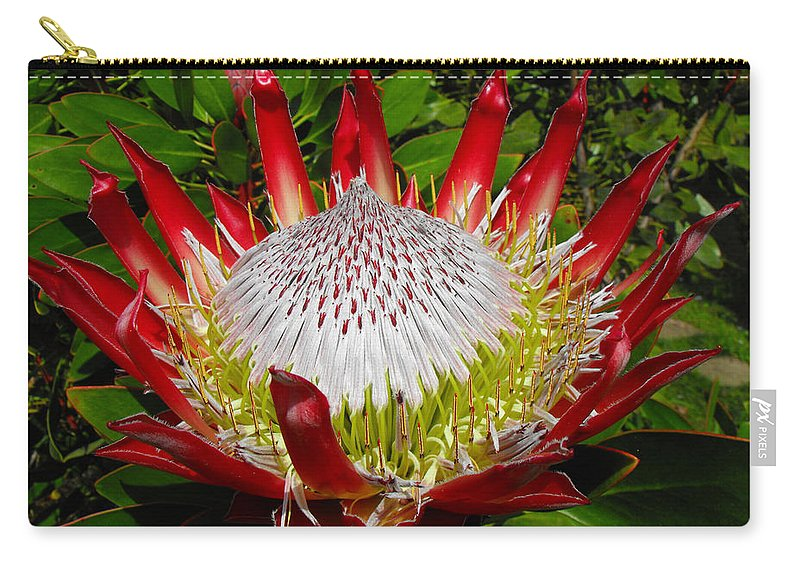 Protea Carry-all Pouch featuring the photograph Red King Protea by Rebecca Margraf