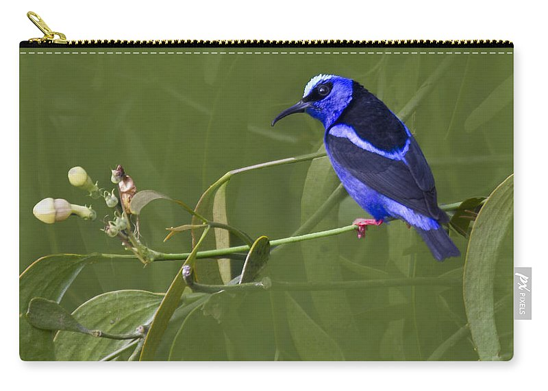 Red_legged_honeycreeper Carry-all Pouch featuring the photograph Red-legged Honeycreeper - Cyanerpes Cyaneus by Heiko Koehrer-Wagner