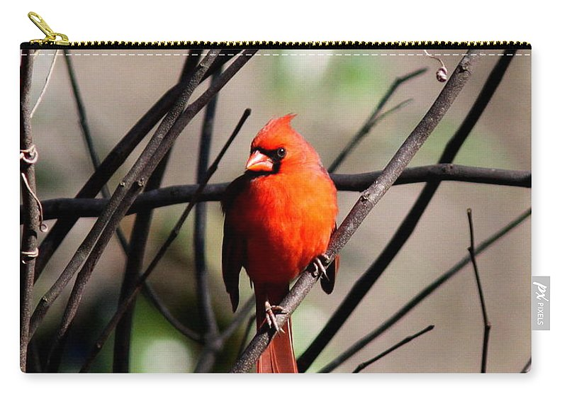 Nature Carry-all Pouch featuring the photograph Red Royalty by Travis Truelove